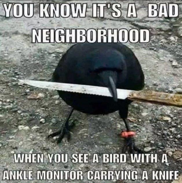 Bad Neighborhood2.jpg