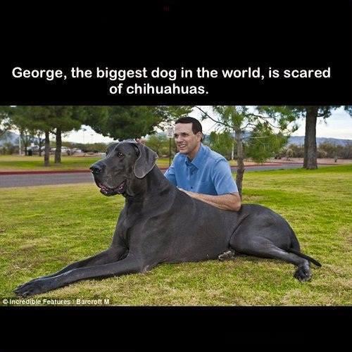 GEORGE BIG DOG.jpg